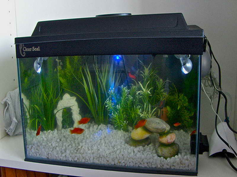 Fish-Tank-Decoration-Pictures-with-small-fish